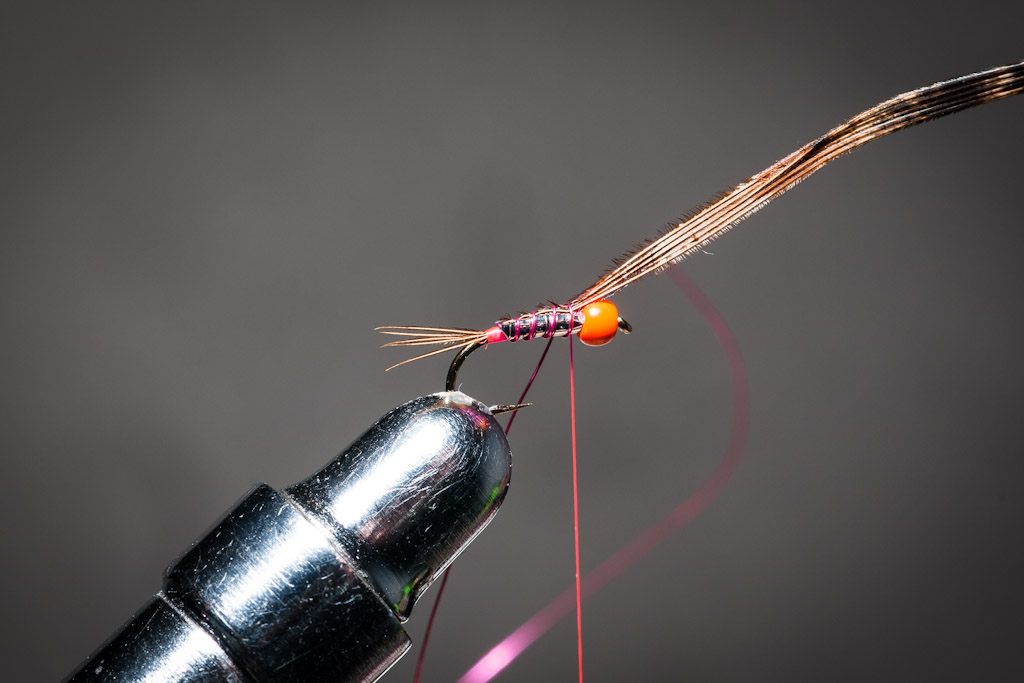 9. Cover the back of the tinsel body with the pheasant tail fibres, fixing it with the copper wire rib