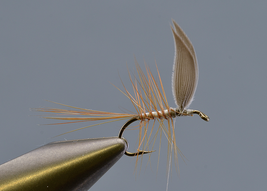 10. Wind the body hackle, once you reach the tail grab the white thread you tied in in section 7 and wind this forwards to secure the body hackle to the hook.