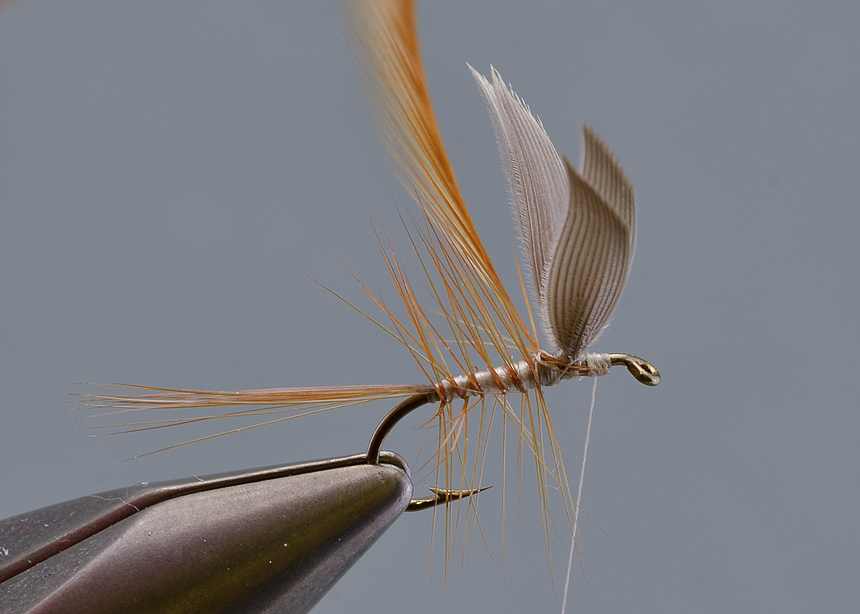 11. Tie in the main hackle and wind this forward, three turns one in front of the other behind the wing, and two in front is usually about right. The length of the hackle should be at least 1.5 times the hook gape, I prefer a slightly longer hackle.