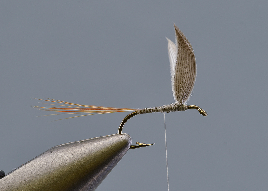 6. Tie in the tail, which should be stiff web-free hackle barbs, The length of the tail should be at least the length of the hook.