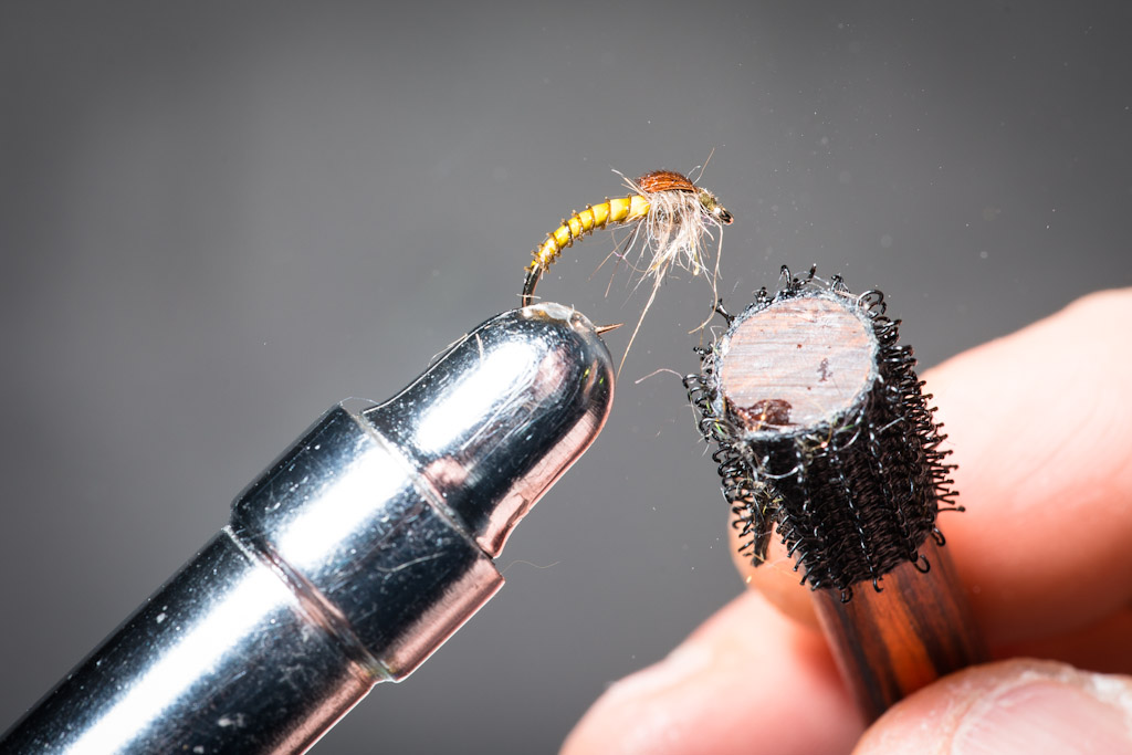 11. 11. Point out some fibres from the thorax to simulate the insect's feet