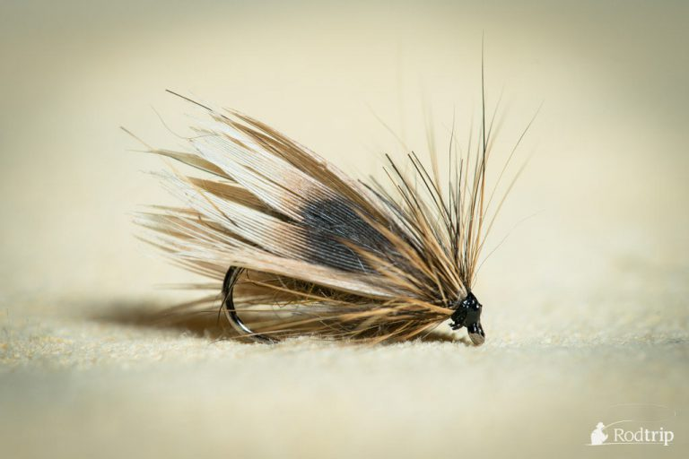 Jeck Sedge tied by Jérémy Habran.