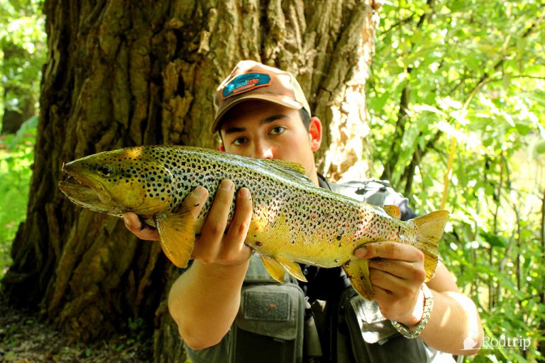 Nice fish taken by sightfishing with a nymph … I wish you the same success !
